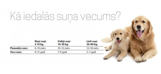Kā iedalās suņa vecums?